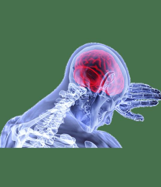 neurologia 1